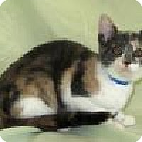 Adopt A Pet :: Rizzo - Powell, OH