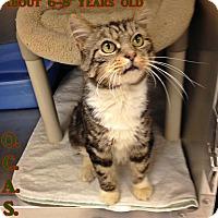 Adopt A Pet :: T-3 - Triadelphia, WV