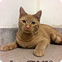 Adopt A Pet :: Leon - Tiffin, OH