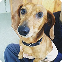 Adopt A Pet :: Trippy - Pompton Lakes, NJ