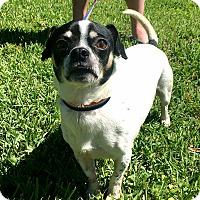 Adopt A Pet :: Rocky Rocket - Vancouver, BC