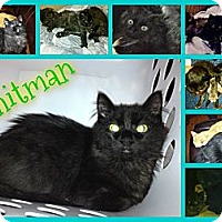 Adopt A Pet :: Whitman - Washington, DC