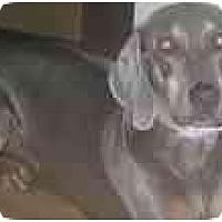 Adopt A Pet :: Indy  **ADOPTED** - Eustis, FL
