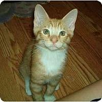 Adopt A Pet :: Edward - Lake Charles, LA