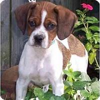 Adopt A Pet :: Hogan - Sugarland, TX