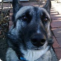Adopt A Pet :: max - Bay City, MI