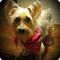 Adopt A Pet :: Scout - Ashland City, TN