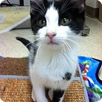 Adopt A Pet :: Ben - Trevose, PA