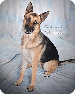German Shepherd Dog Mix Dog for adoption in Middletown, Rhode Island - Gumbo