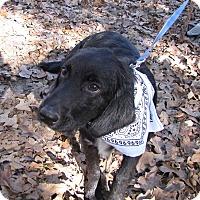 Adopt A Pet :: Boone - Oakland, AR