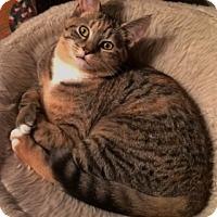 Adopt A Pet :: Brandi - Byron Center, MI