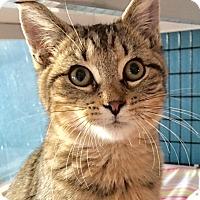 Adopt A Pet :: Tom Tom - Deerfield Beach, FL