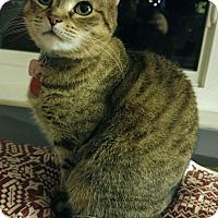 Adopt A Pet :: Daisy - New Albany, OH