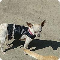Adopt A Pet :: Kammie - Riverside, CA