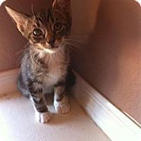 Adopt A Pet :: RONDO - Phoenix, AZ