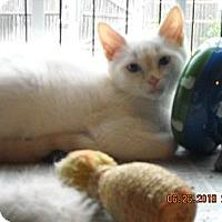 Adopt A Pet :: Tyler - Riverside, RI