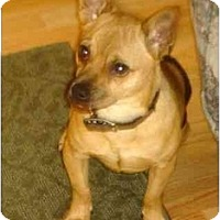 Adopt A Pet :: Adopted!  Riley Ratcliff - Houston, TX