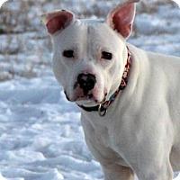 Adopt A Pet :: Contra - Cheyenne, WY