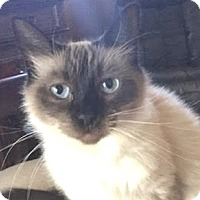Adopt A Pet :: Cerci - Davis, CA