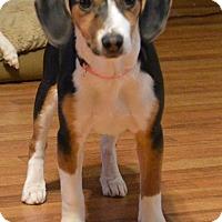 Adopt A Pet :: Luna - Westport, CT