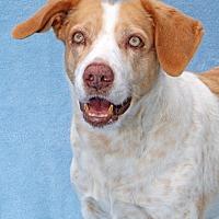 Adopt A Pet :: Fidji - Encinitas, CA