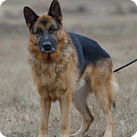 Adopt A Pet :: Levi - Dacula, GA