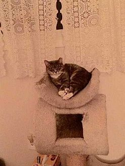 Domestic Shorthair Cat for adoption in New City, New York - Feral Mom
