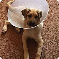 Adopt A Pet :: DANDI - Winnipeg, MB