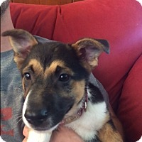 Adopt A Pet :: Ellie - BONITA, CA
