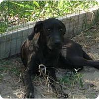 Adopt A Pet :: Hannah - Pointblank, TX