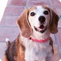 Adopt A Pet :: Zoey May - Phoenix, AZ