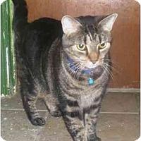 Adopt A Pet :: Dingo - Summerville, SC