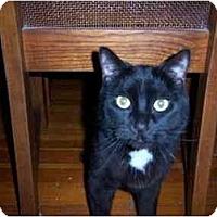 Adopt A Pet :: Butch - Riverside, RI