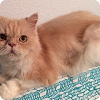 Adopt A Pet :: Mimosa - Beverly Hills, CA
