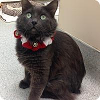 Adopt A Pet :: Devin - Newport Beach, CA