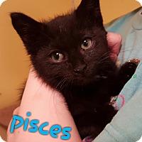 Adopt A Pet :: Pisces - McDonough, GA