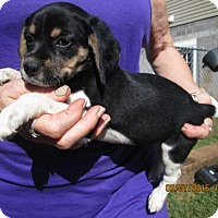 Adopt A Pet :: ROSETTA - Brookside, NJ
