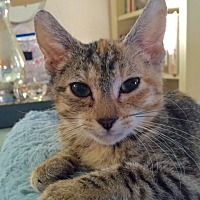 Adopt A Pet :: Minnie Mouse - Fullerton, CA