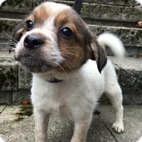 Adopt A Pet :: Tweedle - Harmony, Glocester, RI
