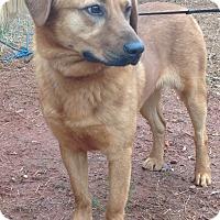 Adopt A Pet :: Buddy - Westport, CT