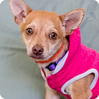 Adopt A Pet :: SWEETIE - Pt. Richmond, CA