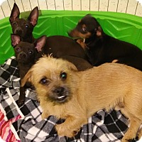 Adopt A Pet :: Rickon Orlando Chapter - Orlando, FL