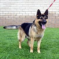 Adopt A Pet :: Blake - Mira Loma, CA