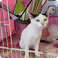 Adopt A Pet :: Dot - San Pedro, CA