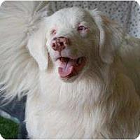 Adopt A Pet :: Jacob - Mesa, AZ