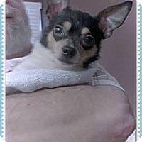 Adopt A Pet :: Noah - Hartsville, TN