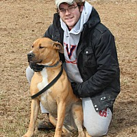 Rhodesian Ridgeback/American Pit Bull Terrier Mix Dog for adoption in Midlothian, Virginia - Nicholas aka Honey Bear
