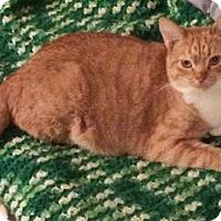 Adopt A Pet :: Keren - North Highlands, CA