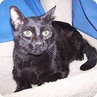 Adopt A Pet :: Leo - Colorado Springs, CO