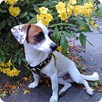 Adopt A Pet :: Memo In Houston - Houston, TX
